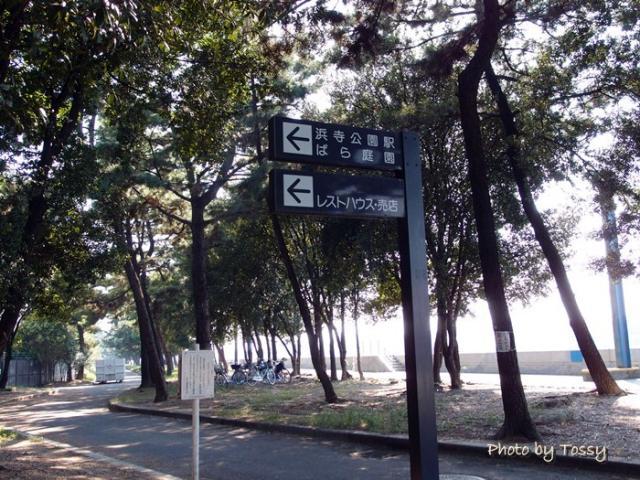 浜寺公園松林