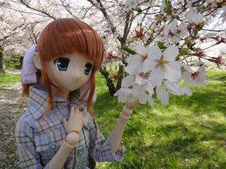 桜2011-02
