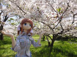 桜2011-03