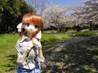 桜2011-04