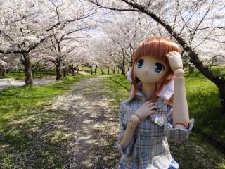 桜2011-01