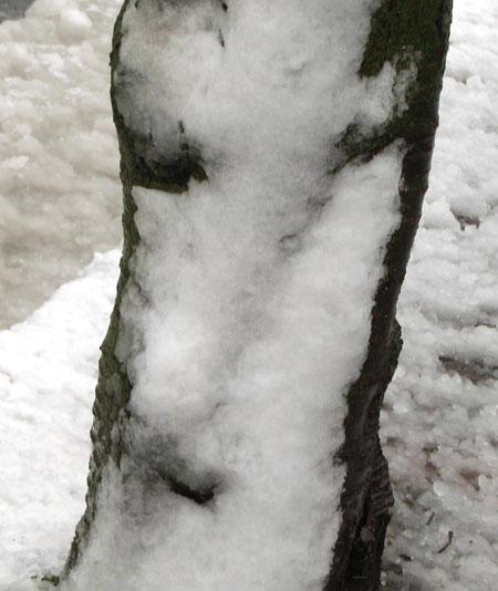 080203雪と桜