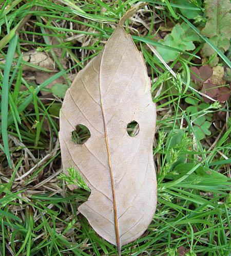080416草を食う葉