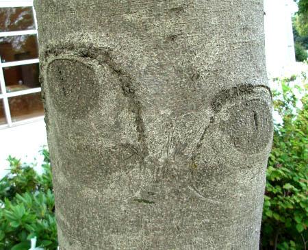 080428猫の木