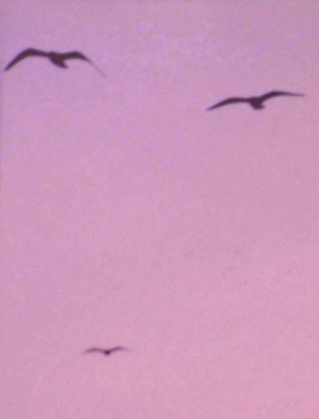 080813鳥顔