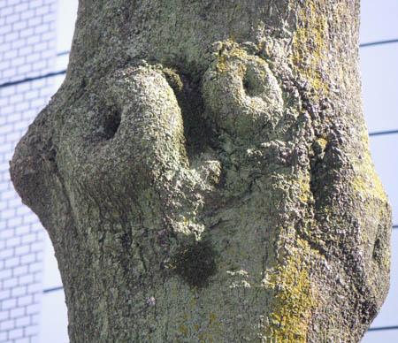 090315目出たい木(2)