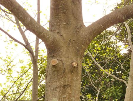 090418触覚のある木