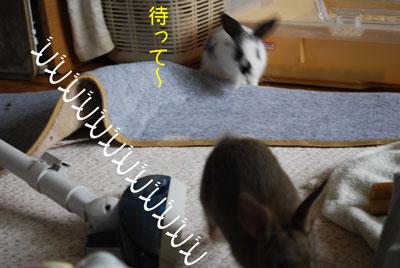 DSC_0031_20081012200325.jpg