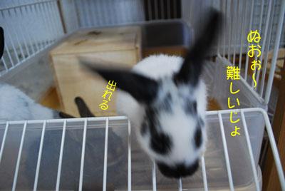 DSC_0039_20081011191220.jpg