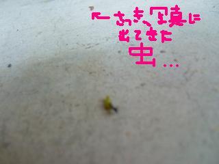 2008_0823arinnko0003.jpg
