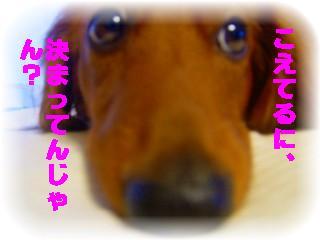 _2008_0725pu-0003.jpg
