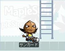 Maple0000056.jpg