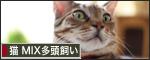 RB_t_kari5.jpg