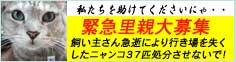 banner_37nyan.jpg