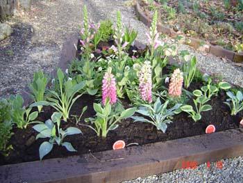 花壇6花植込1