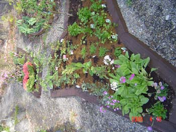 花壇7花植込2