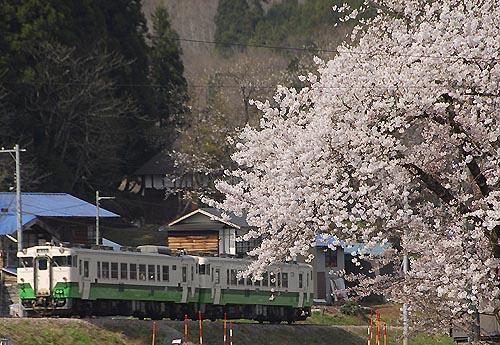 sakuiwasaki001.jpg