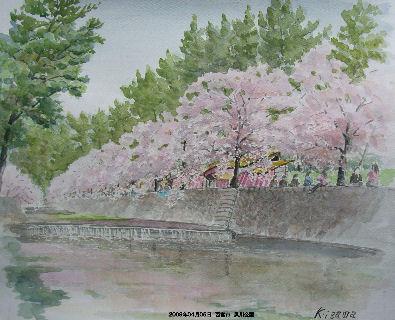 2009年04月05日 西宮市 夙川公園