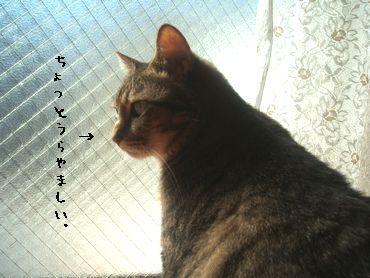 2008 0910_1006 009