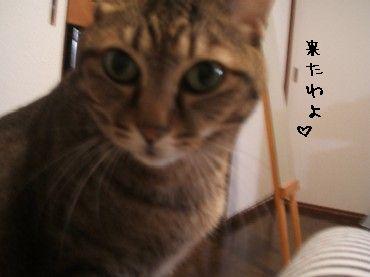 2008_10_17 019
