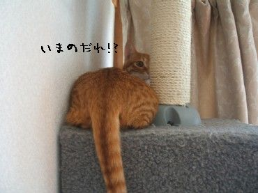2008_10_17 038
