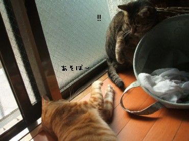 2008_10_17 041