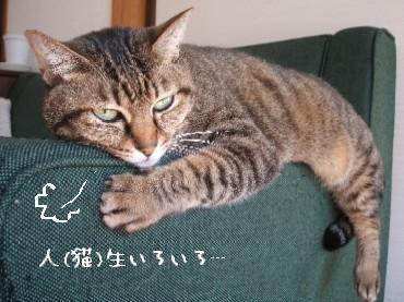 2008_1114 010
