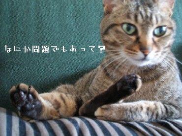 ayame_hen2.jpg