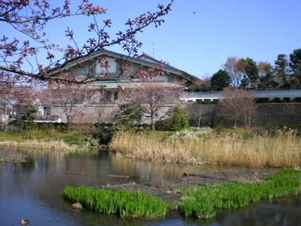 武道館とカモ