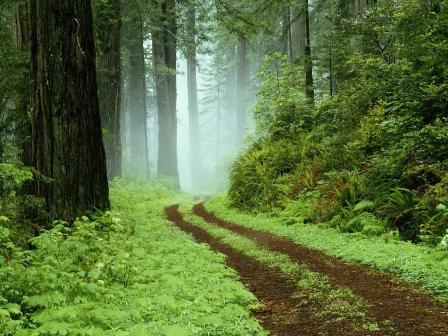 Forest森ブログ