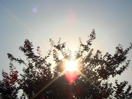 美しい木漏れ日夕方