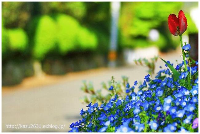花スナップ (1)