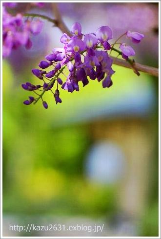 花スナップ (2)