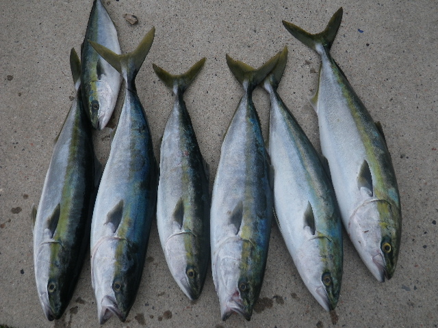 20110503釣果