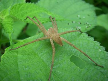 080726カラム視の蜘蛛