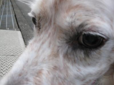 Andy+287_convert_20090730185156.jpg
