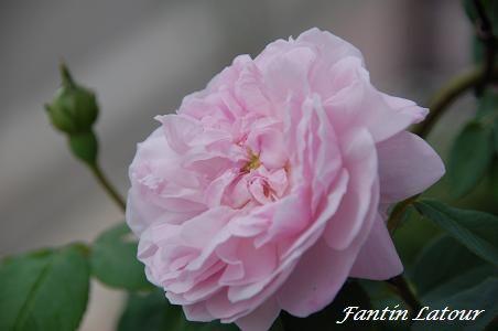 ファンタン・ラトゥール 851