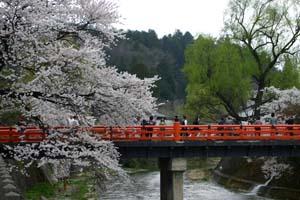 飛騨高山は桜満開