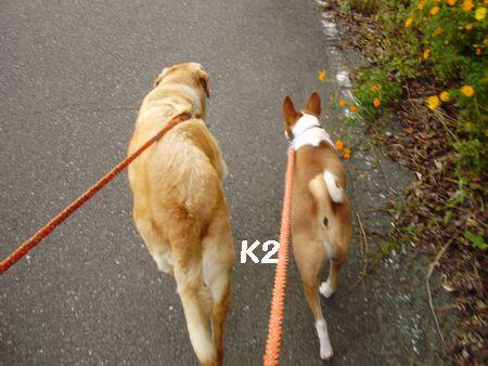 また、歩きますよ!
