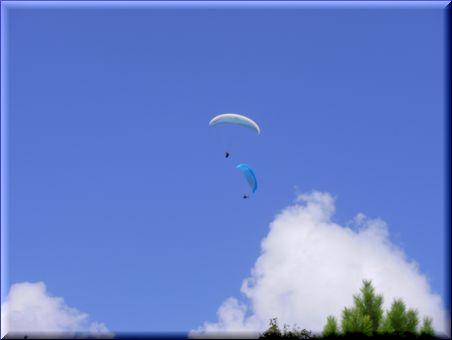 見るたびに飛びたいと言ってます。