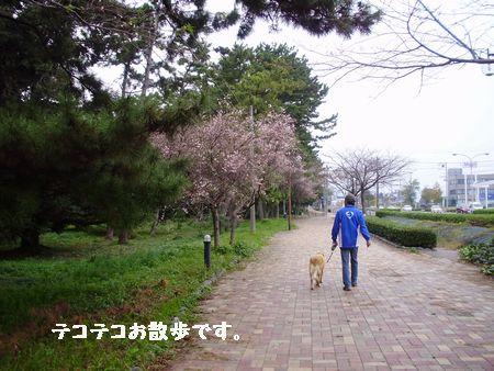 土曜日から黒姫高原に行きます。