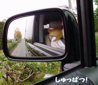 肩のり犬出発!