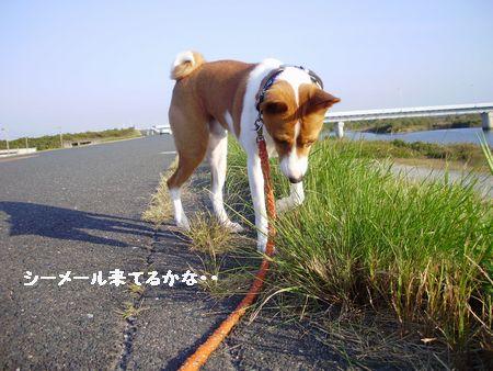 天竜川まで行きました。