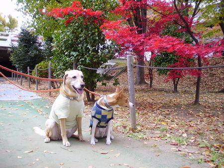 2008 11月の写真