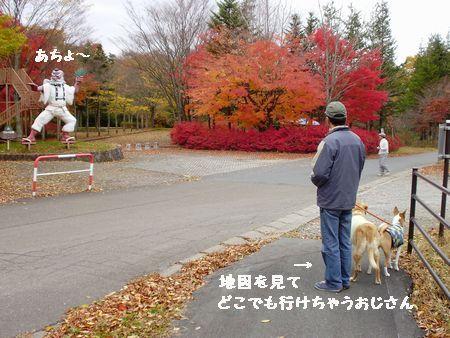 ウットリの紅葉です。