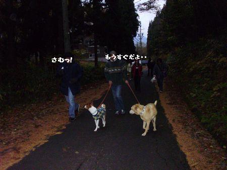 寒いけど散歩します。