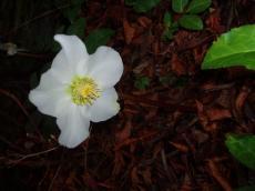 garden_006_convert_20080822080223[1]