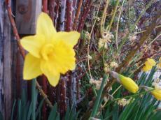 garden_007_convert_20080822080405[1]
