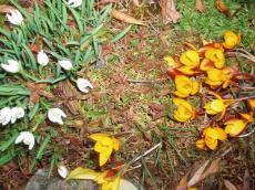 garden_008_convert_20080822080553[1]