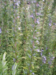 garden+010_convert_20080905065756[1]